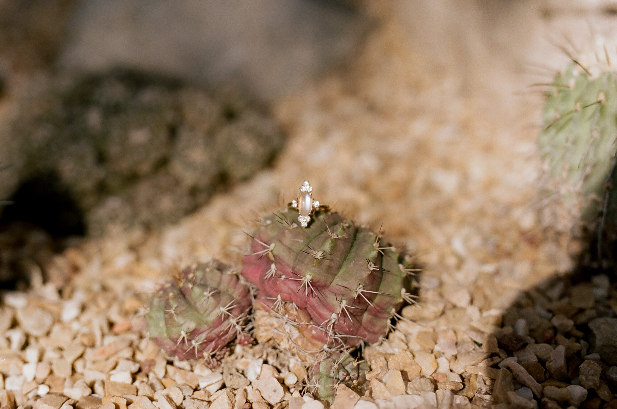 Close up of engagement ring with cactus